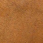 pelle del corpo